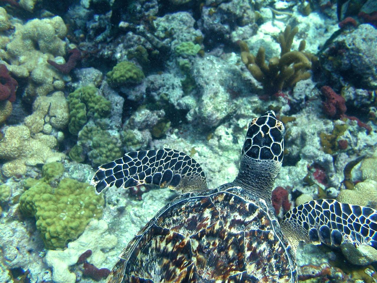 Marathon Reef Dive Trip