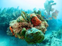Key West Outer Reef Trip