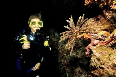 Night Dive Trip