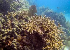 Coral Restoration Dives & Coral Workshop