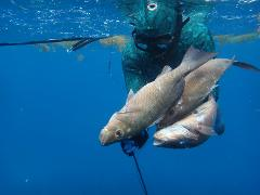 Spearfishing 102