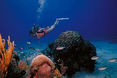 Looe Key Dive Trip