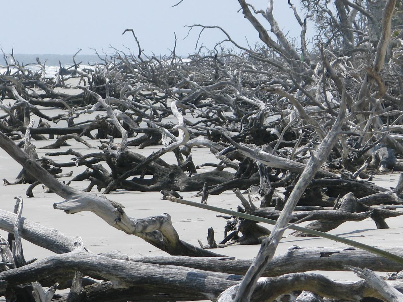 Georgia Conservancy Blackbeard Island Paddle Jan. 28th - Kayak Rental