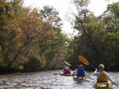 5 Hour Altamaha Kayak Tour