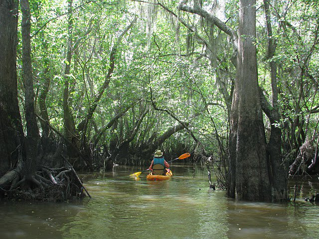 3 Hour Cathead Creek Kayak Tour