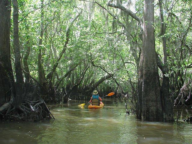 3 Hour Cathead Creek Kayak Tour