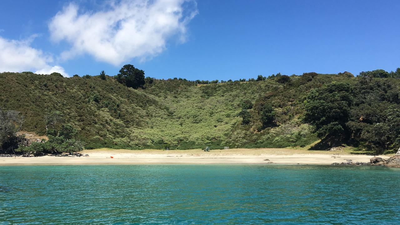 Waiheke Island Bush & Beach Walk Gift Card