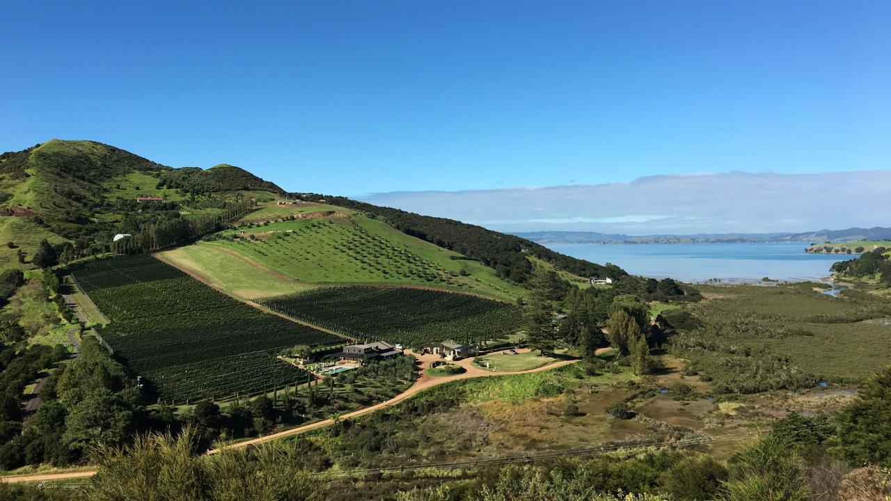 Waiheke Island Vineyards & Bush Walk