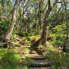 Ku-ring-gai National Park Bush Walking Tour