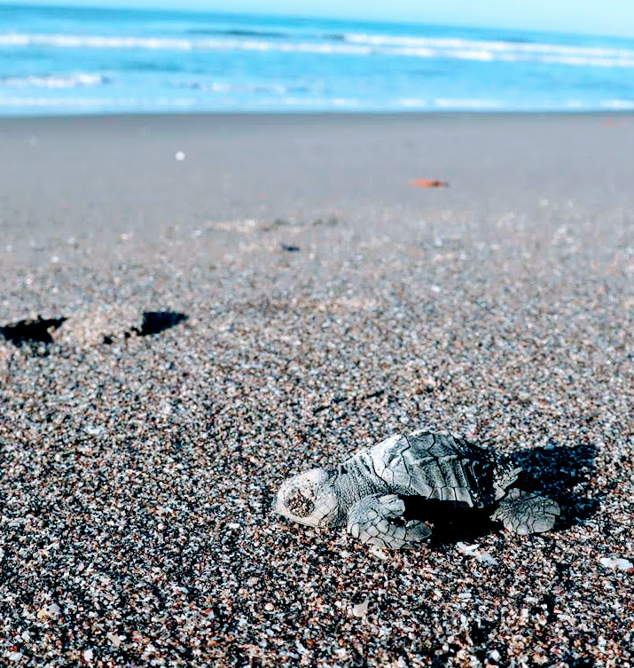 2 Day - Turtle Conservation on Brasilies Island