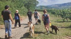 Dog Trekking Experience con pranzo (anche per i cuccioli) e degustazione