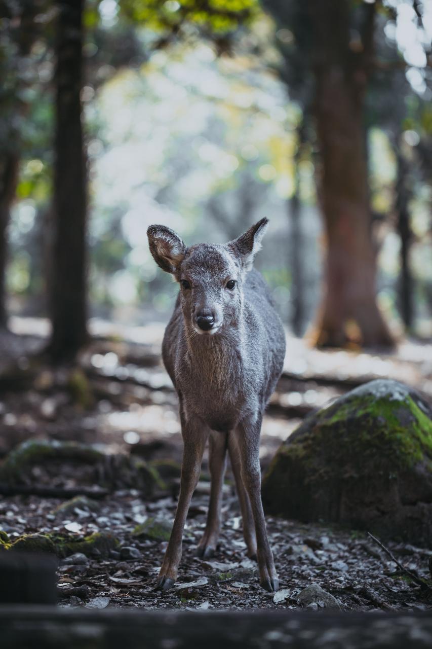 Eigo Tour - Walk in Nara City