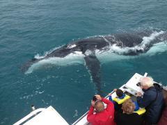 Kalbarri Whale Watching