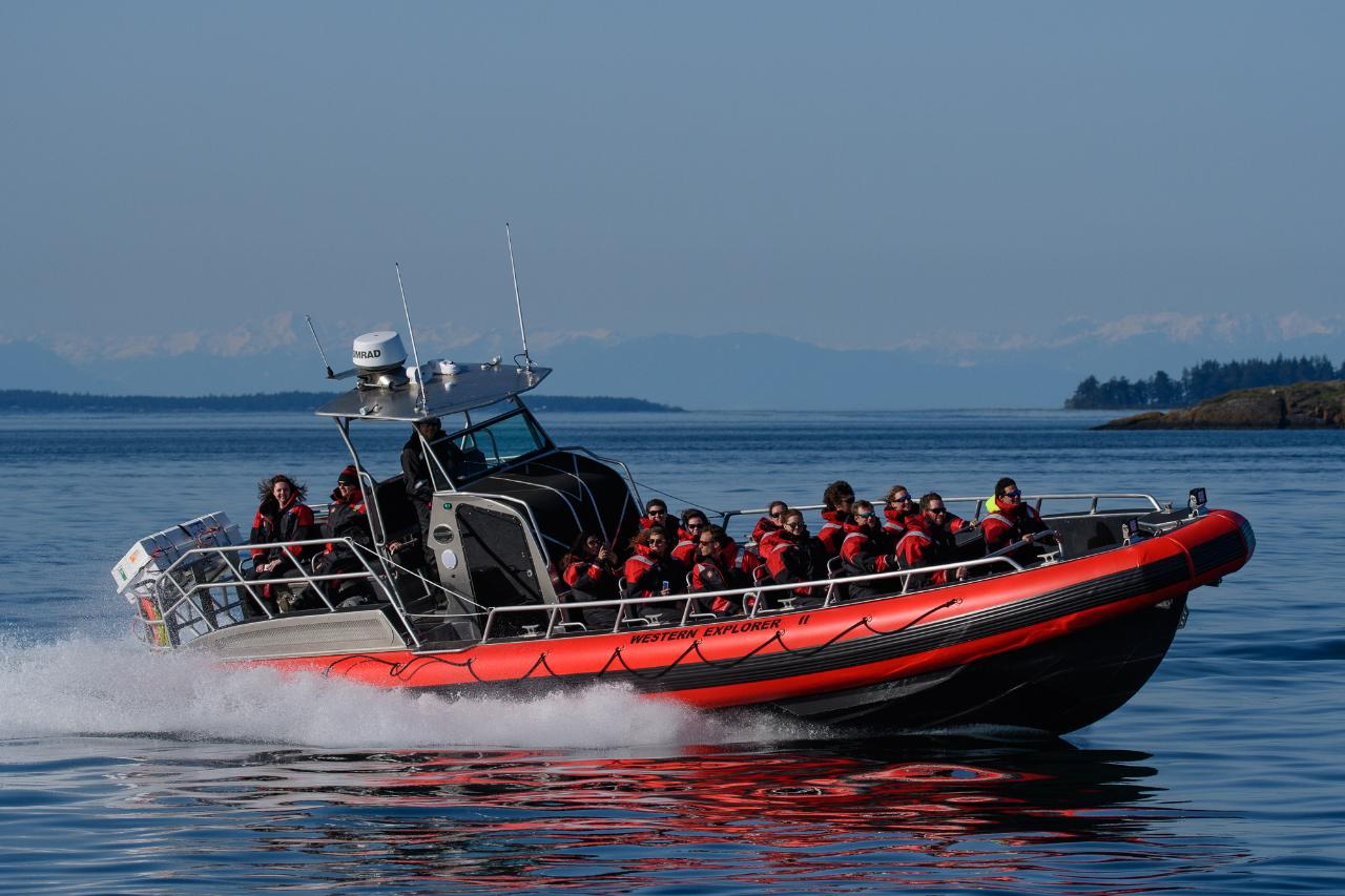 Western Explorer II (2.5 - 3 Hour Open Boat Tour) Gift Card