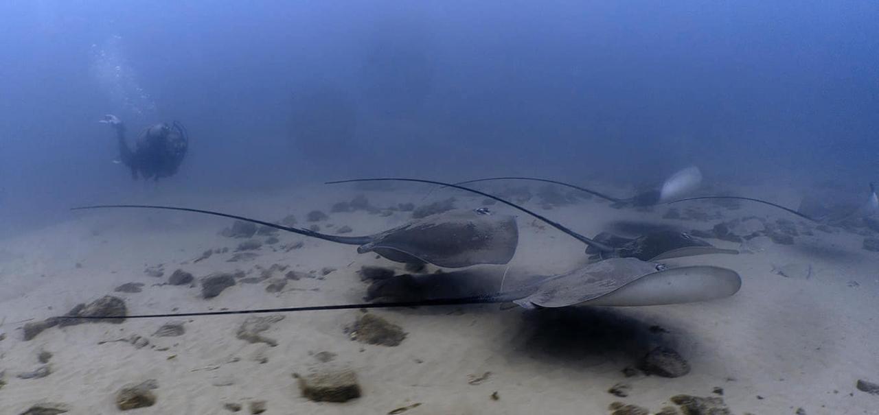 GC Seaway Boat Drift Dive