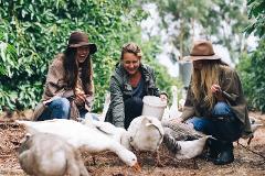 Burnside Organic Farm Tour