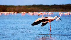 The Flamingo Sanctuary of La Guajira