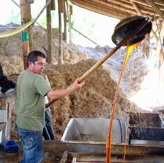 Quimbaya Panela Tour from Pereira