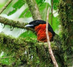 Bird Watching – Quimbaya Fauna and Flora Sanctuary Private Full Day Tour Including Lunch