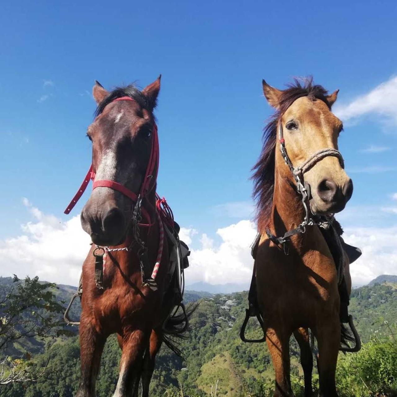 Horseride, Coffee Tour & Willys Ride from Salento