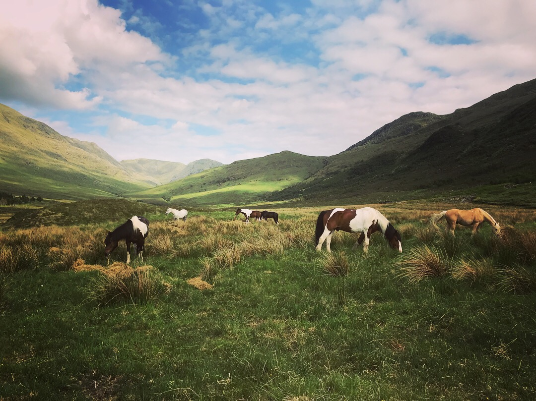 Short Break horse trail riding adventure - Knoydart