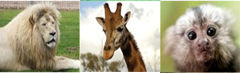 Altina Wildlife Park - BOOKED OUT
