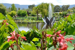 Blue Lotus Water Garden - Yarra Junction Booked Out