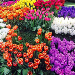 Melbourne International Flower & Garden Show - BOOKED OUT