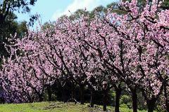 Igloo Experience {No. 3} - Rayner's Orchard