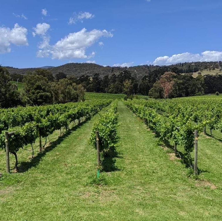 Igloo Experience {No. 4} - Steels Gate Winery