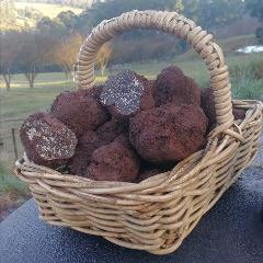 Yarra Valley Truffière Truffle Hunt