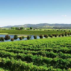 """The Picnic"" High Tea Picnic & Wine at Yarrawood Estate, Yarra Glen"