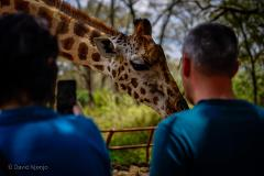 Day Tour To Giraffe Center, Elephant Project And Lunch At Carnivore