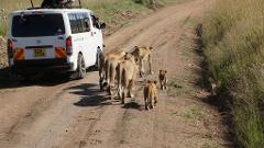 4 Days 3 Nights Group Joining Safari To Maasai Mara Only