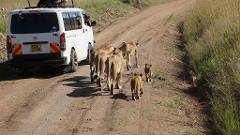 4 Days 3 Nights Group Joining Safari To Maasai Mara Only