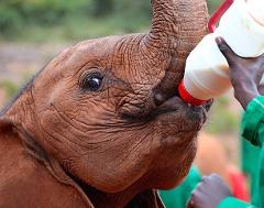 Day Tour To Nairobi National Park Elephant Project Giraffe Center, Bomas Of Kenya And Dinner At Carnivore Restaurant