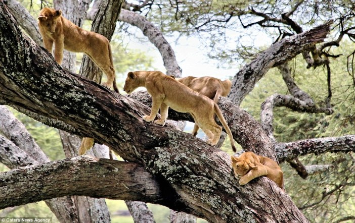 5 Days /4 nights Tanzania Classic Safaris To Lake Manyara,Ngorongoro Crater And Serengeti National Parks
