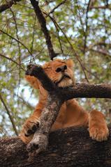 4 Days, 3 Nights Safari To Lake Manyara, Ngorongoro Crater And Serengeti National Park