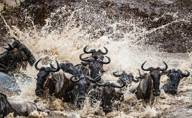 11 Days, 10 Nights Kenya And Tanzania Private Lodging Safari