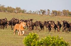 Overnight Private Safari To Maasai Mara