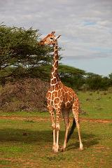 3 Days, 2 Nights Samburu National Reserve Private Safari Package