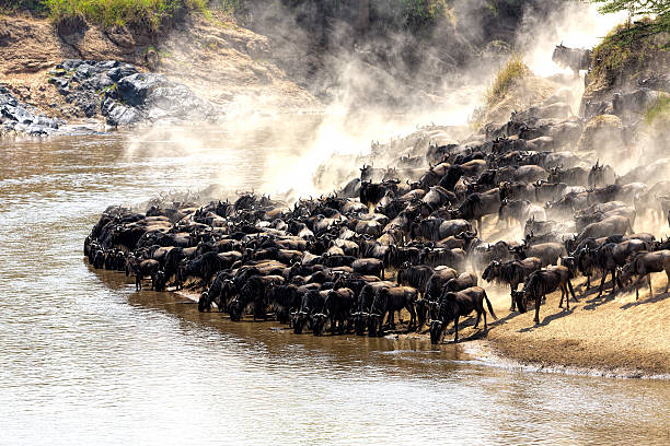 12 Days Best Kenya and Tanzania Safari