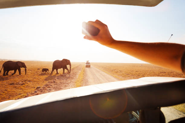 6 Days, 5 Nights Budget Safari To Masai Mara, Lake Nakuru And Amboseli