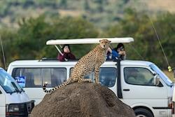 4 day safari in Maasai Mara and Lake Nakuru National Park