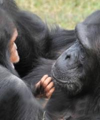 3 Days, 2 Nights Safari To Ol Pejeta Conservancy