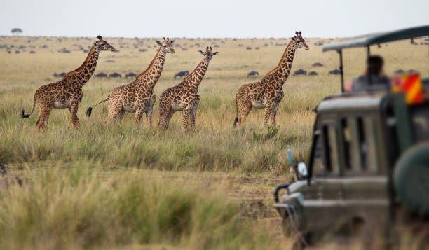 3 days, 2 nights safari to ngorongoro and Serengeti