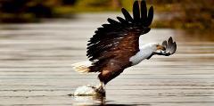10 Days, 9 Nights Kenya Birding Experience In Masai Mara, Lake Naivasha, Lake Bogoria, Tsavo East And Amboseli