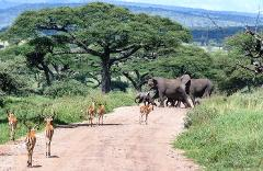 Day Trip to Tarangire National Park from Arusha