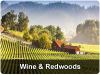 Wine Country and Sequoia Redwoods Escape Tour