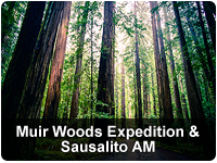 Muir Woods Expedition & Sausalito AM with  Ferry Bay Cruise